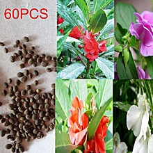 60PCS/Bag High Survival Rate Balsam Seeds Impatiens Balsamina Flowers brown