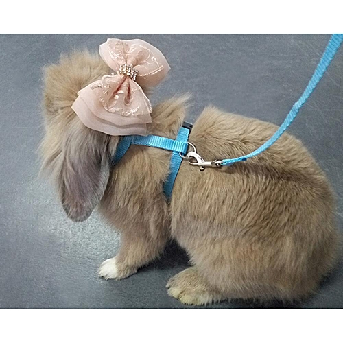 Buy louis will pet rabbit harness leash for soft nylonrunning pet rabbit harness leash for soft nylonrunningwalking harness leash with safe bell publicscrutiny Image collections