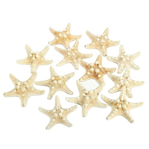 Buy Generic 12pcs White 2 3 Bleached Knobby Starfish Wedding