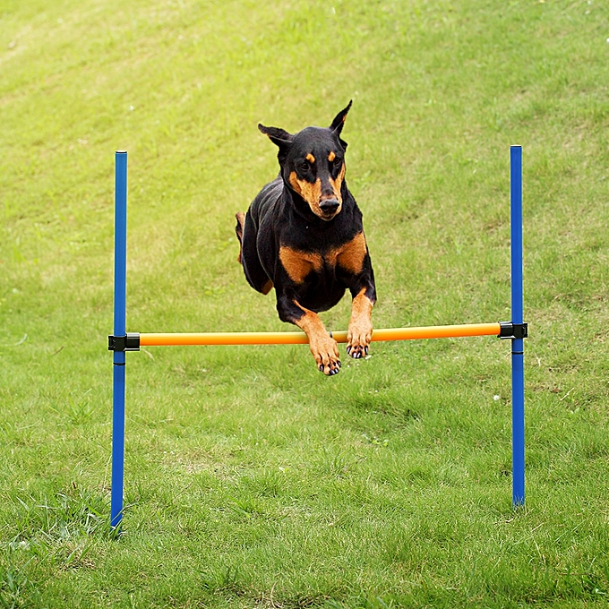 Generic Outdoor Pet Dog Agility Sports Games Training