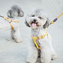 Pet Dog Collar + Harness + Leash Three Sets, S, Harness Chest Size: 34-50cm, Collar Neck Size: 24-35cm, Pet Weight: 8kg Below(yellow)