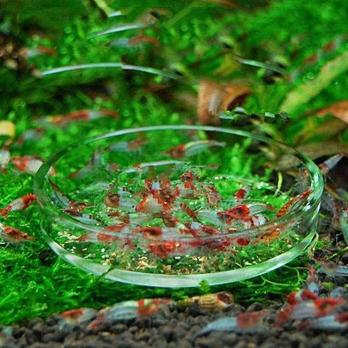 ... Aquarium Fish Tank Clear Acrylic Shrimp Feeding Food Dish Feeder Tray Glass Container # 7cm ...