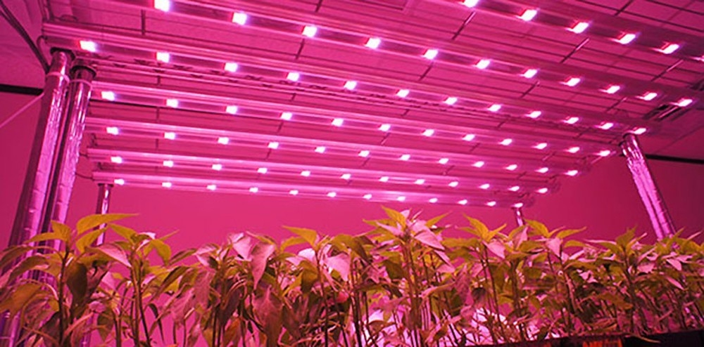 Lightme 600W ( True 220W ) LED Grow Light Panel Lamp for Hydroponics Indoor Plant with 120 LEDs