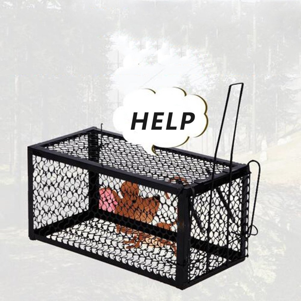 Rodent Animal Mouse Humane Live Trap Hamster Cage Mice Rat Control Catch  Bait US XL