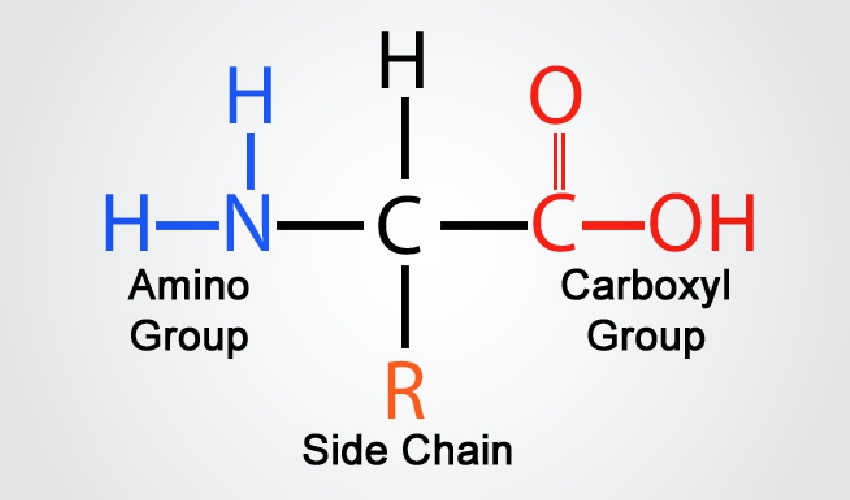 Key-Feature-Amino-Acid-Formula