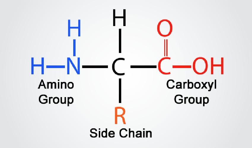 Key-Feature-Amino-Acid-Formula