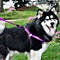 Pet Dog Collar + Harness + Leash Three Sets, M, Harness Chest Size: 43-67cm, Collar Neck Size: 33-52cm, Pet Weight: 15kg Below (purple)