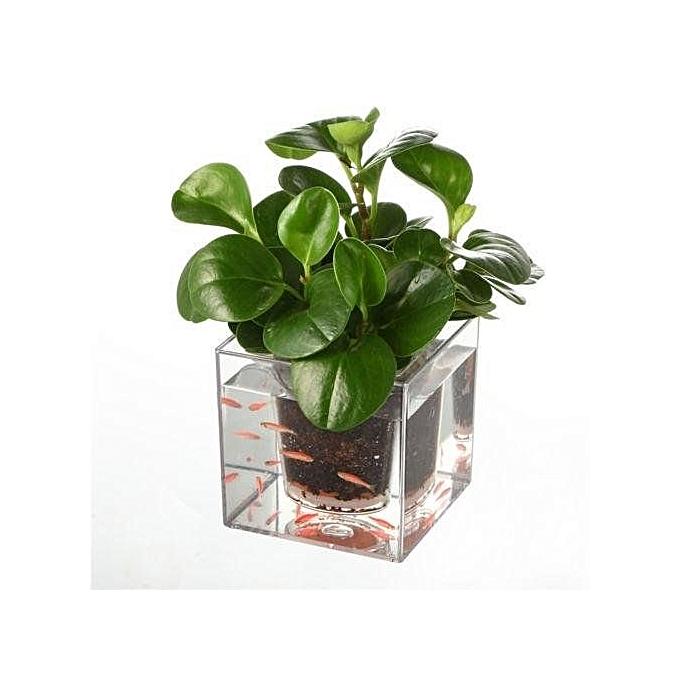 Buy Universal Clear Aquarium Self Watering Pot Planter Plant Fish