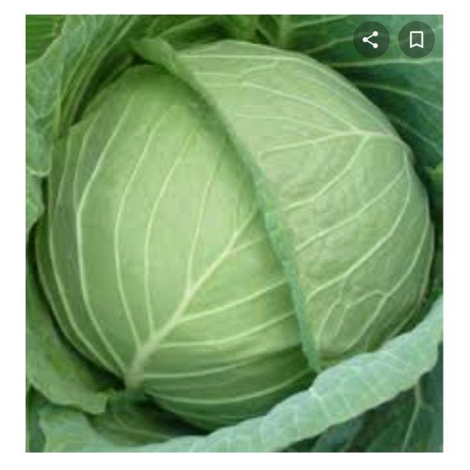 Gloria Cabbage--good alternative to Kale