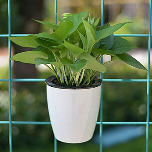 buy generic lazy flower pots automatic water absorbing green radish