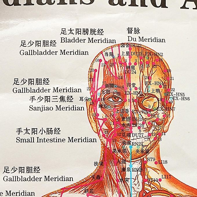 Buy Generic Chinese Medicine Body Acupuncture Points Meridians And